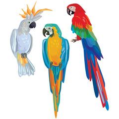 Vector cartoon parrots