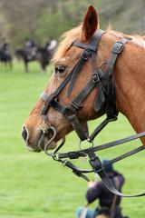 US Calvary Horse