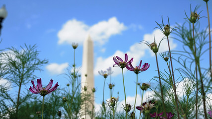 Flowers and the Washington Monument