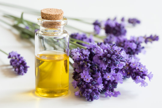 A bottle of essential oil with fresh lavender twigs