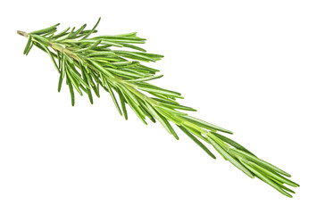 Sprig rosemary herb isolated on a white background
