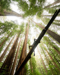 Low angle view of man lying on tree trunk in redwoods