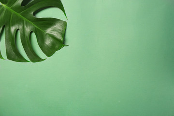 Green tropical leaf on color background Wall mural
