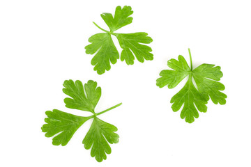 green parsley leaf isolated on white background. Top view