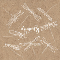 Dragonfly.  Vector set. Isolated hand-drawn elements on kraft paper.