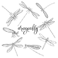 Dragonfly. Vector contour illustration on white background. Isolated elements for design, eight insects.