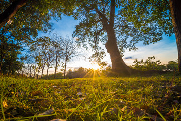 Beautiful summer landscape sunset on meadow and tree
