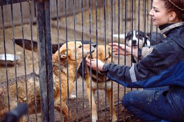 Fototapeta Girl volunteer in the nursery for dogs. Shelter for stray dogs. obraz
