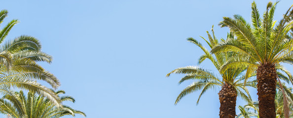 Palm Grove. Background of palm leaves