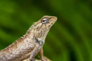 Image of chameleon on nature background. Reptile