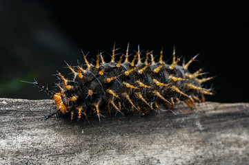 close up shot of catterpillar