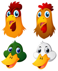Heads of chickens and ducks