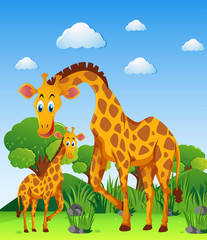 Two giraffes in the field