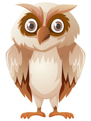 Owl with brown feather