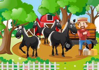 Farmer and black horses in the farmyard