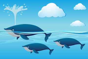 Three whales swimming in ocean