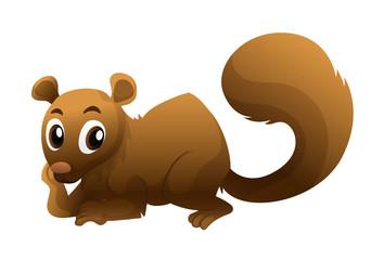 Brown squirrel on white background