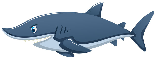 Blue shark on white background
