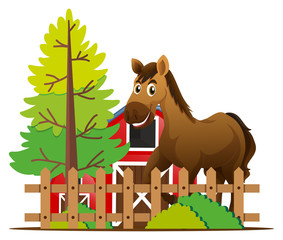 Brown horse in the farm