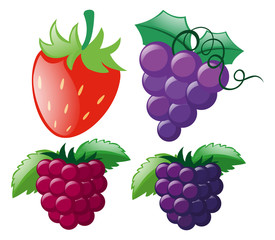 Four types of berries