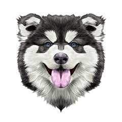 dog breed Alaskan Malamute puppy with his tongue hanging out, head looking right symmetry sketch vector graphics color picture