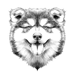 dog breed Alaskan Malamute puppy with his tongue hanging out, head looking right symmetry sketch vector graphics black and white drawing