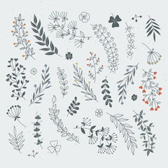 Decorative floral elements for design projects. Rustic branches and leaves hand drawn illustration
