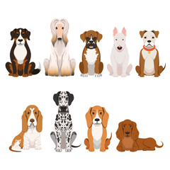 Different breeds of dog. Group of domestic animals in cartoon style. Vector illustrations set