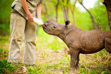Matimba is a month old orphaned rhino who was found beside her poached mother's lifeless body.