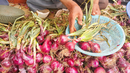 Moroccan onion seller is sitting on the ground at a vegetable market putting fresh red onions into baskets for sale.