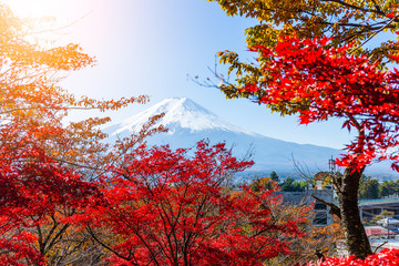 Mount Fuji and red maple tree