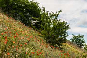 flying quadcopter over the field of red poppies and wildflowers