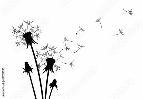 dandelion flower stock image and royalty free vector files on rh fotolia com dandelion vector free dandelion vector free download