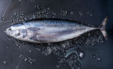 Foto auf AluDibond Fisch Raw fresh whole tuna fish on crushed ice over dark wet metal background. Top view with space