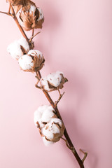 Cotton branch with fluffy blossoms on pink background. Vertical minimalistic composition with copy space.