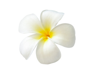 Foto op Canvas Frangipani Plumeria on white background