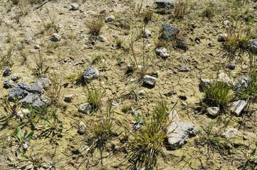 Drought Sussex UK