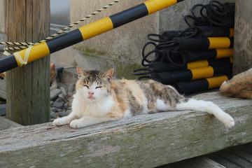 青島の猫 愛媛県大洲市
