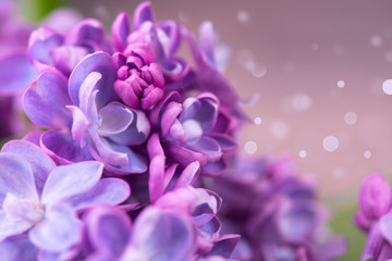Fotoväggar - Lilac flowers bunch violet art design background