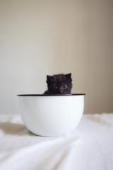 Petit bébé chat noir