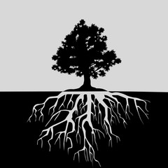 Split view of oak tree and its roots. Black and white illustration