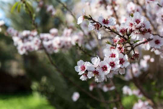 Blossom Agdz