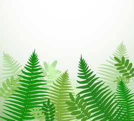 Botanical background with fern branches