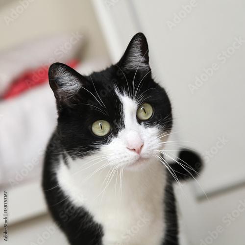 chat noir et blanc photo libre de droits sur la banque d 39 images image 159753167. Black Bedroom Furniture Sets. Home Design Ideas