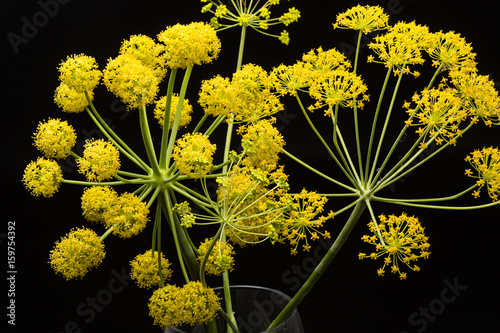 Flores Silvestres Amarillas Stock Photo And Royalty Free Images On