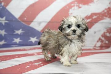 Havapeke on American flag background