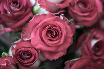 Bouquet of fresh roses, flower bright background, close-up