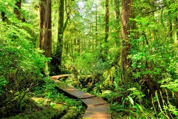 Hiking trail through the rainforest of Pacific Rim National Park, Vancouver Island, BC, Canada