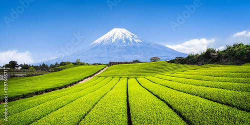Fototapete Mount Fuji mit Teefeldern in Shizuoka, Japan