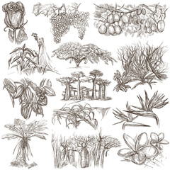 flowers and trees around the world - an hand drawn collection, freehand sketching
